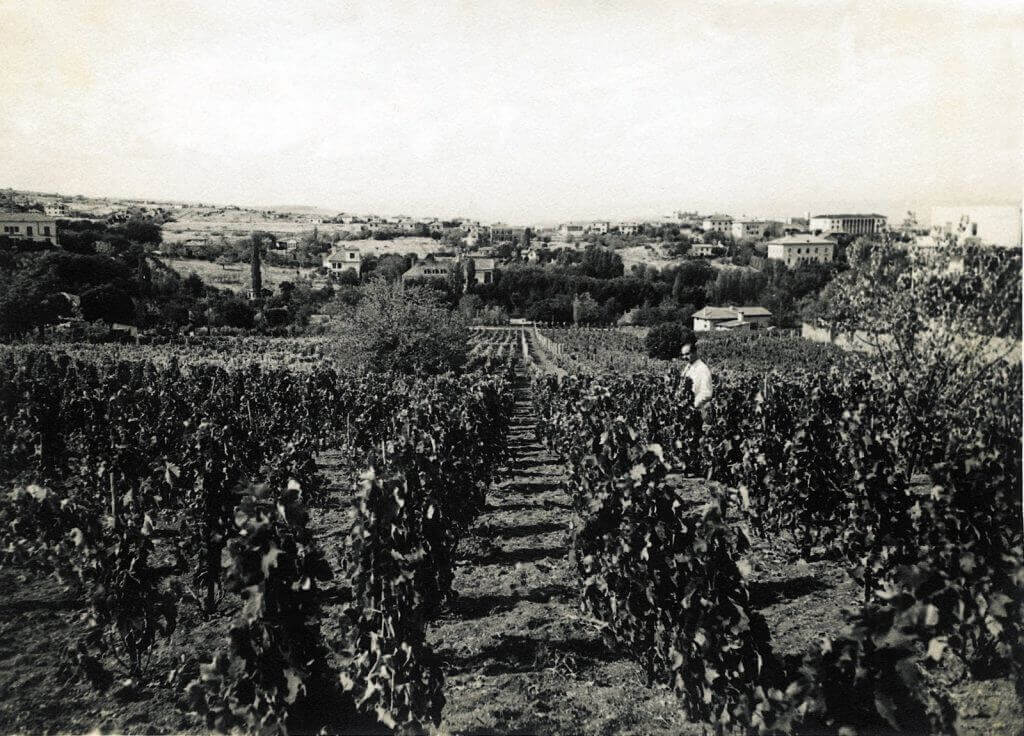 kavaklidere-vīni-vīna dārzi